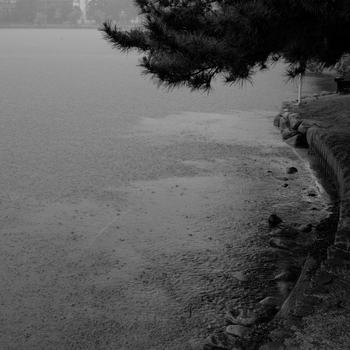silhouettes_of_trees_by_rain_drops.jpg